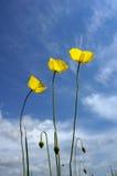 kwiat zdjęcie royalty free