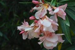2 kwiat Zdjęcie Stock