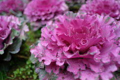 Kwiat Obraz Royalty Free