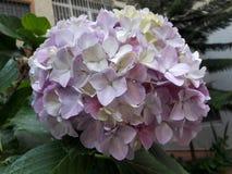 02 kwiat Zdjęcia Royalty Free