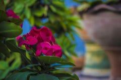 22 kwiat Zdjęcia Royalty Free