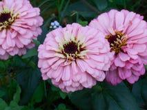 Kwiat 08 Zdjęcie Stock
