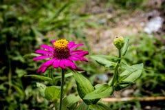 Kwiat 24 Zdjęcia Stock