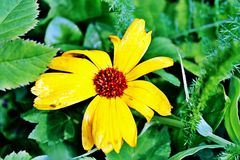 Kwiat imagem de stock royalty free