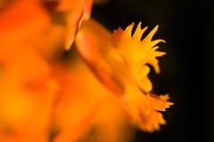 kwiat abstrakcyjne Zdjęcia Stock