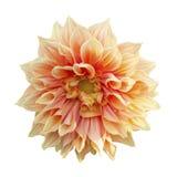 kwiat abstrakcyjne Obrazy Royalty Free