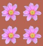 kwiat abstrakcyjne Zdjęcie Royalty Free