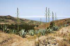 kwiat agawa el hierro krajobrazu roślin Zdjęcia Royalty Free