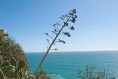 Kwiat agawa i morze śródziemnomorskie Fotografia Stock