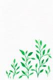Kwiat akwarela twój tło tekst Zdjęcia Stock