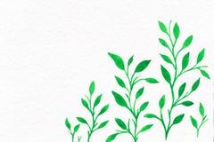 Kwiat akwarela twój tło tekst Obrazy Stock