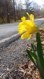 Kwiat alongside droga Zdjęcia Royalty Free