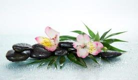 Kwiat alstroemeria i kamienie obraz stock