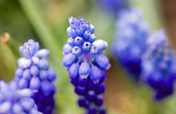 Kwiat anthos, flos (,) Zdjęcia Stock