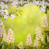 Kwiat background_73 Zdjęcia Stock