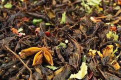 Kwiat badjan na ziołowej herbacie Obraz Royalty Free