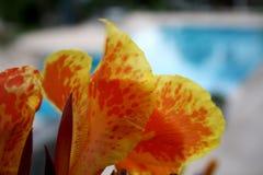 Kwiat basenem obrazy stock