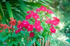 Kwiat Bush w Drewnianym garnku z lekkim racą obraz stock