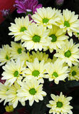 kwiat centrum zieleń Zdjęcia Stock