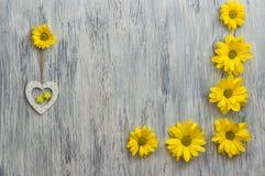Kwiat chryzantema na drewnianej powierzchni verdure pozyskiwania środowisk gentile Obraz Royalty Free