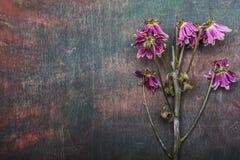 Kwiat chryzantemy tła Abstrakcjonistyczna dykta Obraz Royalty Free