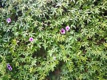 Kwiat ściana Zdjęcia Royalty Free
