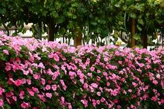 kwiat ściana Fotografia Stock