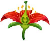 Kwiat część Zdjęcie Royalty Free