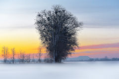 kwiat czasu zimy śniegu Fotografia Stock