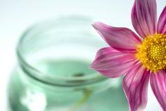 kwiat czerwień Zdjęcia Stock