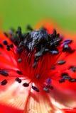 kwiat czerwień obraz stock