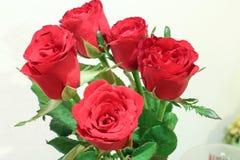 kwiat, czerwona róża Obrazy Royalty Free