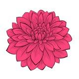 Kwiat dalia rysująca w graficznych stylów konturach, liniach odosobnionych na białym tle i, Obraz Stock