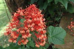 kwiat dekoracyjny fotografia royalty free