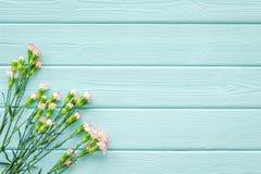 kwiat delikatna wiosna Mały różowy goździk na błękitnej turkusowej drewnianej tło odgórnego widoku przestrzeni dla teksta zdjęcie royalty free