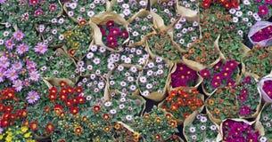Kwiat dla sprzedaży Zdjęcie Royalty Free