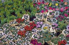 Kwiat dla sprzedaży obrazy stock
