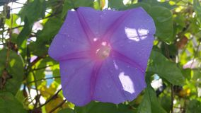 Kwiat dla życia Fotografia Royalty Free