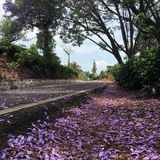 Kwiat droga zdjęcia royalty free