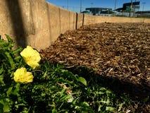 Kwiat droga Zdjęcie Royalty Free