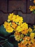 Kwiat dzień Fotografia Stock