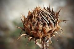 kwiat dziki Obraz Stock