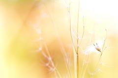kwiat dziki Zdjęcia Royalty Free