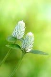 kwiat dziki Zdjęcie Stock