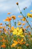 kwiat dziki Zdjęcie Royalty Free