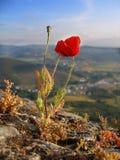 kwiat dziki Fotografia Royalty Free