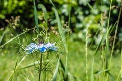 Kwiat dzwoniąca miłość w mgle Fotografia Royalty Free