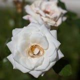 kwiat dzwoni ślub Fotografia Royalty Free