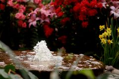 kwiat fontanna Fotografia Royalty Free
