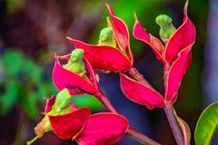 Kwiat fotografii zakończenie obrazy royalty free